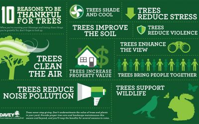 Benefits of Planting Trees Infographic