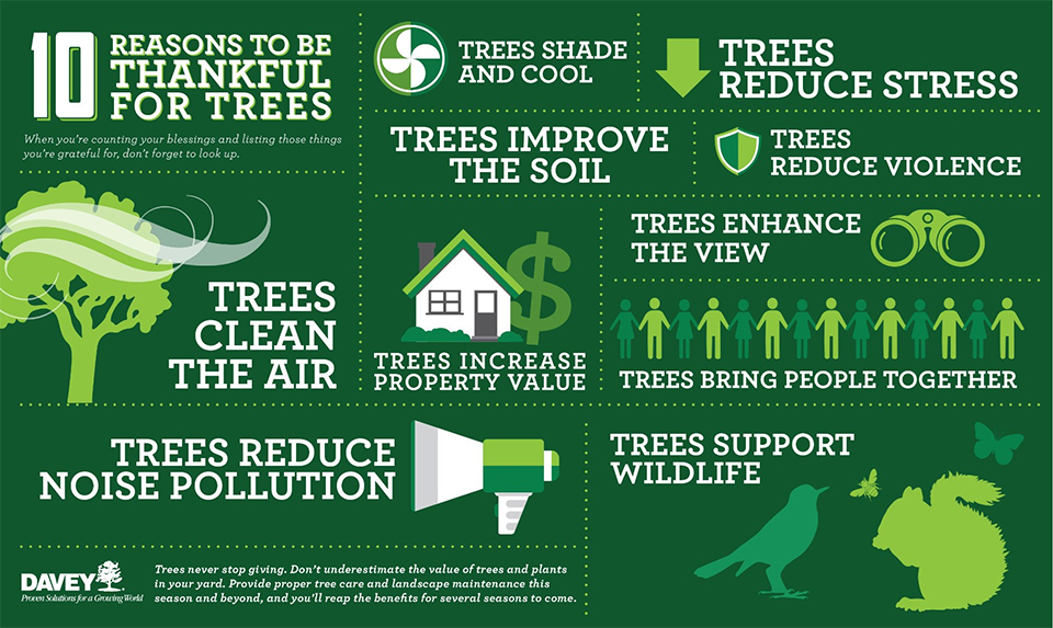 Benefits Of Planting Trees Infographic Tree Service Sarasota