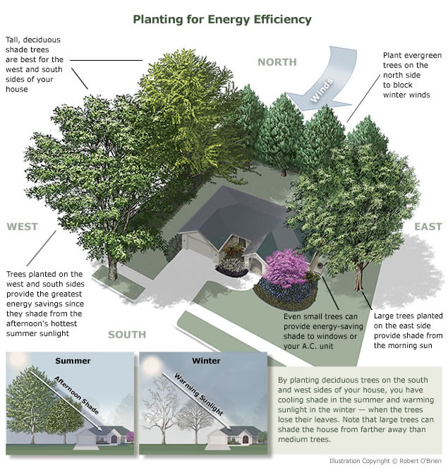 Tree Planting for Energy Efficiency