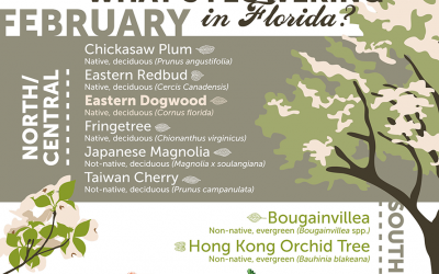 Sarasota Flowering Trees: February