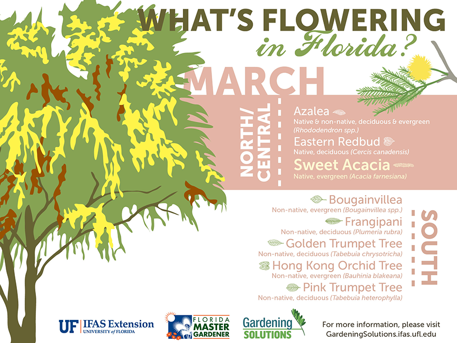 Sarasota Flowering Trees: March